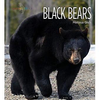 Zwarte beren (levende wilde)