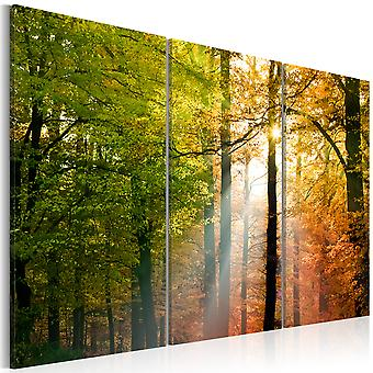 Impresión de lona - un tranquilo bosque de otoño