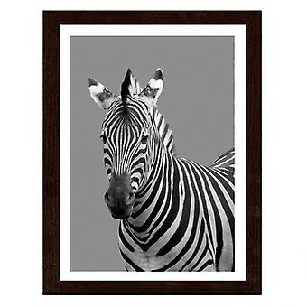 Picture In Brown Frame, Zebra In Black And White
