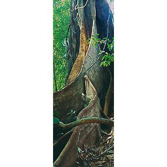 Drzewa w lesie Kao Sok Park Narodowy Surat Thani prowincji Tajlandii Poster Print