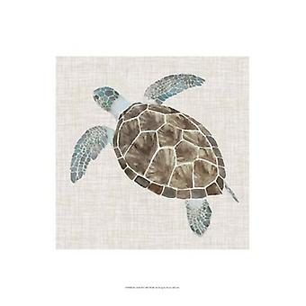 Sea Turtle II Poster Print by Naomi McCavitt (13 x 19)