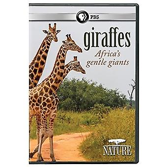 Nature: Giraffes: Africa's Gentle Giants [DVD] USA import