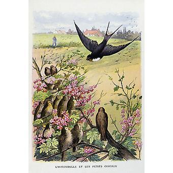 Gustave Fraipont Poster Print
