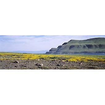 Island in the pacific ocean Santa Cruz Island Santa Barbara County California USA Poster Print