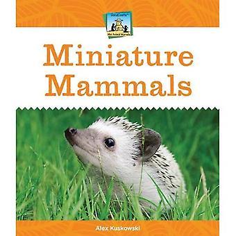 Miniatyr däggdjur (Sandcastle: Mini djur underverk)