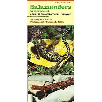 Salamanders in Your Pocket: A Guide to Caudates of the Upper Midwest (A Bur Oak Guide)