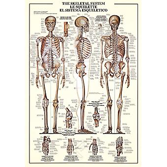 The Skeletal System 1000 piece jigsaw puzzle 680mm x 490mm  (pz)