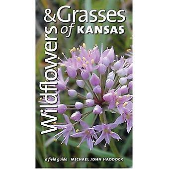 Fleurs sauvages et graminées du Kansas: un Guide de terrain