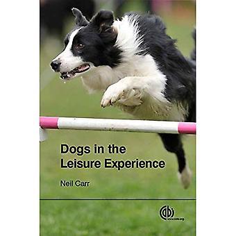 Hundar i fritid Experience