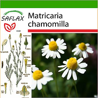 Saflax - 300 seeds - With soil - Mayweed - Camomille sauvage - Camomilla - Manzanilla común - Echte Kamille