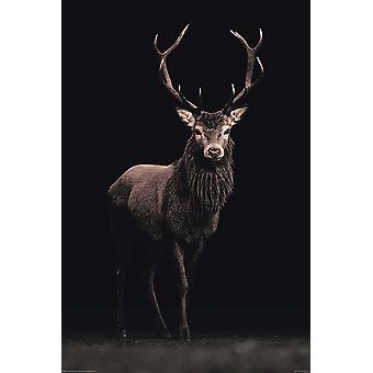 Kings of nature poster deer