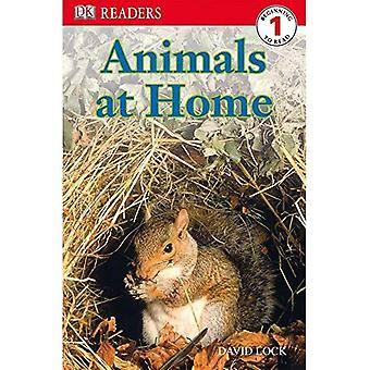 Animals at Home (DK Readers: Level 1)