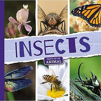 Insects (Parts of an Animal)