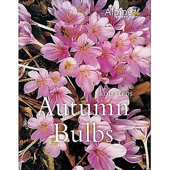 Autumn Bulbs