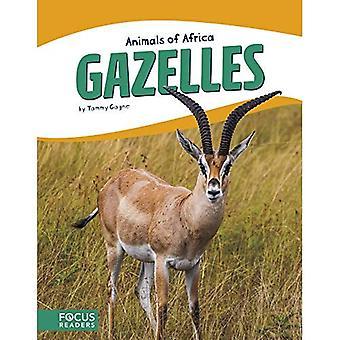 Animals of Africa: Gazelles