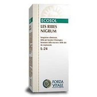 Forza Vitale Black Currant Ribes Nigrum Les 50Ml. (Herbalist's , Natural extracts)