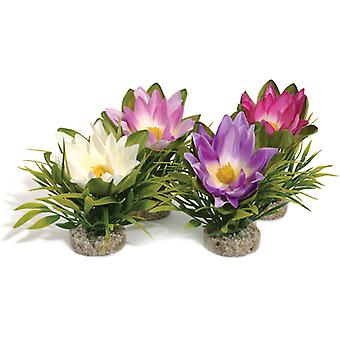 Sydeco Coloured Plants Lotus Flower 17cm (Pack of 6)