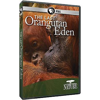 Nature: The Last Orangutan Eden [DVD] USA import
