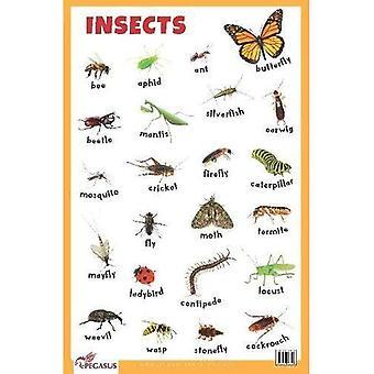 Grafico Educativo Insetti (Poster)