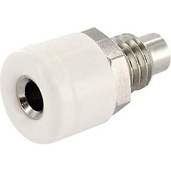 econ connect HOBWS Jack socket Socket, vertical vertical Pin diameter: 2.6 mm White 1 pc(s)