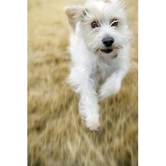 Dog Running PosterPrint