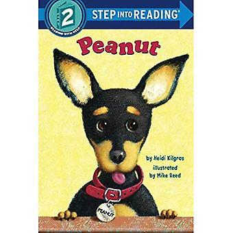 Amendoim (passo para ler - nível 2 - Paperback)