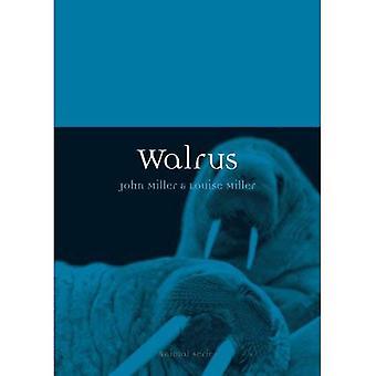 Walrus (Animal)