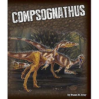 Compsognathus (exploration dinosaures)