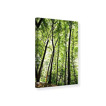 Canvas afdruk Forest