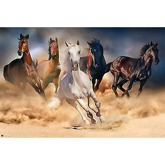 Five Horses Poster Poster Print