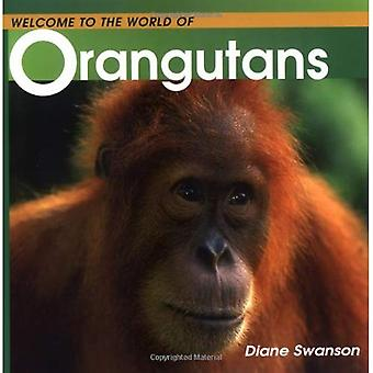 Welcome to the World of Orangutans
