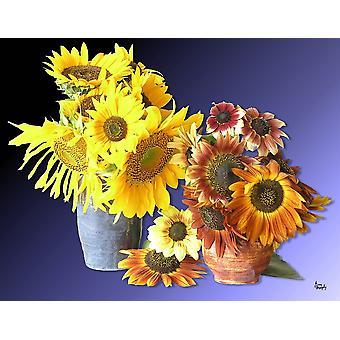 Sonnenblume 16 Poster Print von Greg Murphy (26 x 20)