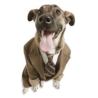 Un chien avec un costume PosterPrint