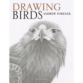 Dibujo de aves por Andrew Forkner - libro 9781782214922