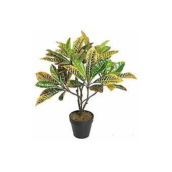 Potted 65 Cm Croton Tree Rushfoil