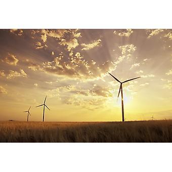 Wind Turbines In Barley Field At Sunset Near St Leon Manitoba PosterPrint