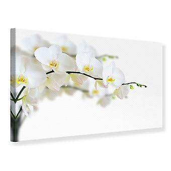 Lona impressão orquídeas brancas