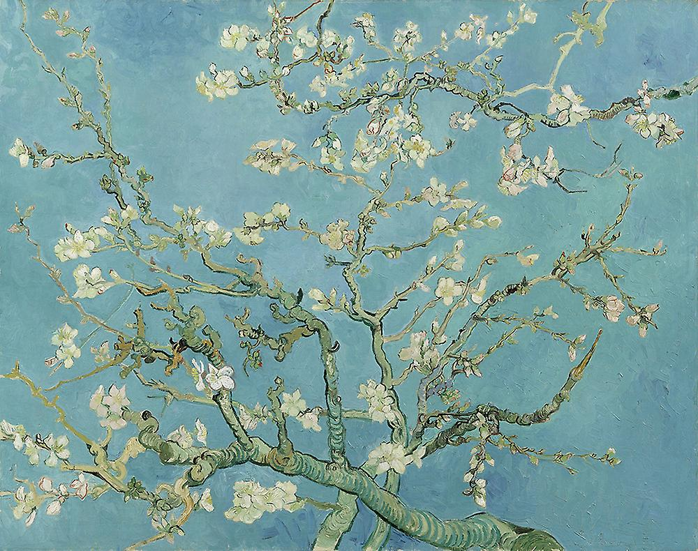 Vincent Van Gogh - Almond blossom Poster Print Giclee