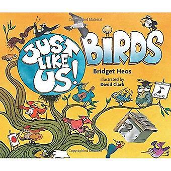 Genau wie wir! Vögel