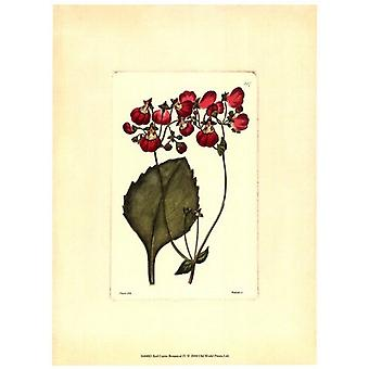Red Curtis Botanical IV Poster Print by Vision studio (10 x 13)