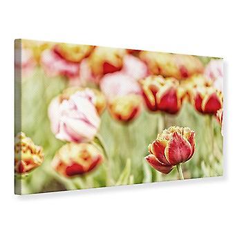 Lærred, skønheden i tulipanen