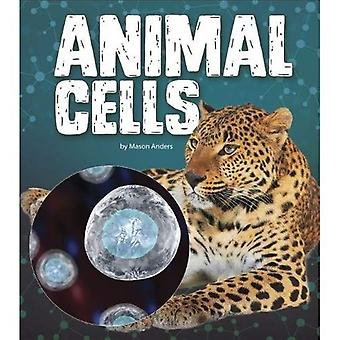 Animal Cells (Fact Finders:� Genetics)