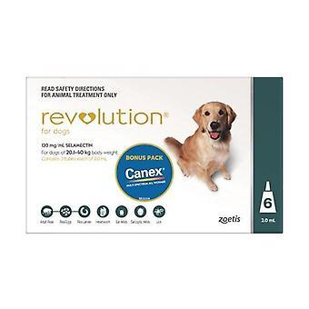 Revolution Teal 6 Pack
