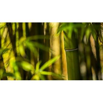 Bamboo Afternoon II Poster Print by Rita Crane