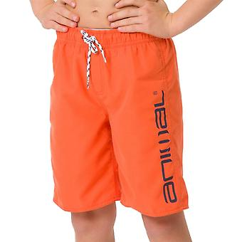 Animal Kids Tannar Boardshorts | Bright Yellow
