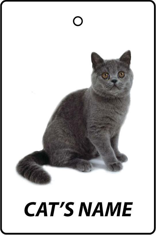Ambientador de coche personalizado de pelo corto exótico gato