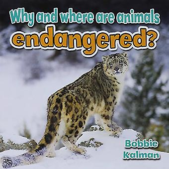 Why and Where Are Animals Endangered? (All about Animals Close-Up)
