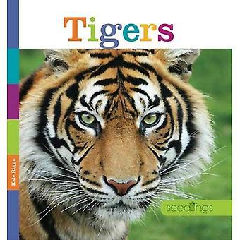 Tigers (Seedlings)