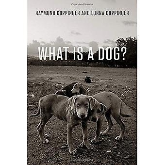 O que é um cão?