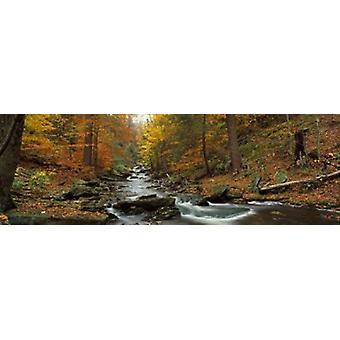 Fall Trees Kitchen Creek PA Poster Print